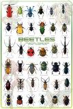 Beetles Posters