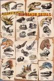 Dinosaur Skulls Reconstructed Posters