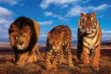 Tres gatos Póster