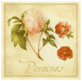 Pivoines Prints by Vincent Perriol