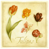 Tulipes Prints by Vincent Perriol