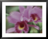 Close view of orchids in a rain forest, Costa Rica, Photographic Print
