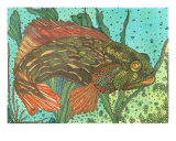 Striped Blenny Giclee Print by Annette Maggio