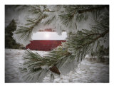 Frosty Pine Tree Photographic Print by Randolph Peterson