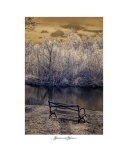 Dying Alone Photographic Print by Shelly Alexander