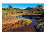 Ruisseau En Hiver Dans La Plaine Des Maures Photographic Print by Patrick Morand