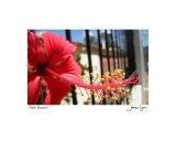 Red Flower Photographic Print by James Lyons