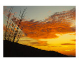 Octillo Sunset Photographic Print by Michael S Wills