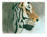 Young Male Tiger Profile Giclee Print by Annette Maggio
