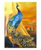 Tuscan Peacock Wydruk giclee autor Mary Rucker