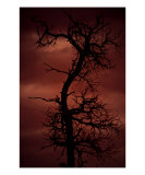 Tree Of Nightmares Photographic Print by Danielle Tracy