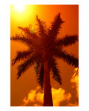 Palm Melt Photographic Print by Florene Welebny