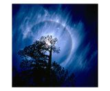Planet Bluish Tree Photographic Print by Hansoo Kim