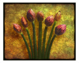 Chives Buds Photographic Print by Digital Crafts