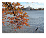Fall Foliage Around Thomas Jefferson Memorial 8 Photographic Print by William Luo