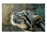 Leopard Dreams Photographic Print by Heather Croxton