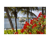 Boathouse View, Hamilton, Bermuda Photographic Print by George Oze