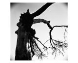 Tree Number Two Photographic Print by Scott Donschikowski