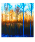 Winter Sunset Through Woods On Lake Siljan Giclee Print by Dan Berkeland