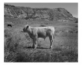 Calf Photographic Print by Steve Epstein