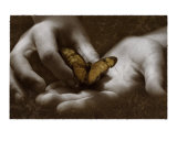 The Butterfly Effect Photographic Print by Abdul Kadir Audah
