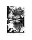 Bridge In Pond Photographic Print by James Lyons
