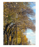 Washington Dc Fall Season Photographic Print by William Luo