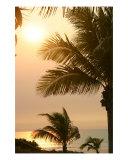 Broome Tropics Photographic Print by Jessica Emery