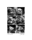 Feline Family Photographic Print by James Lyons