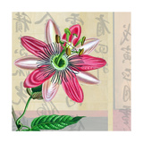 Zen Passion Flower II Giclee Print by Ricki Mountain