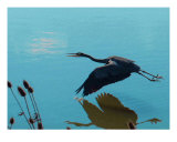 Blue Heron Photographic Print by Howard Kennedy