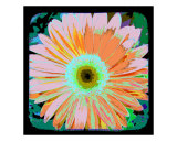 Pop Art Daisy Fotodruck von Francisco Valente