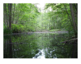 Natures Calmness Photographic Print by Luc Auger