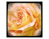 Orange Rose Photographic Print by Francisco Valente