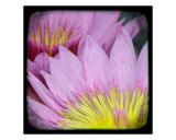 Lotus Photographic Print by Francisco Valente