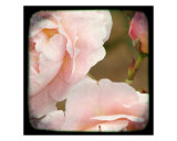 Rosebud Photographic Print by Francisco Valente