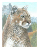 Cougar Giclee Print by Carla Kurt