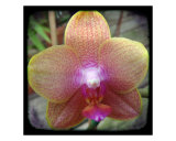 Orchid Photographic Print by Francisco Valente