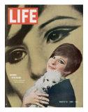 Barbra Streisand, March 18, 1966 Premium Photographic Print by Bill Eppridge