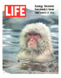 Snow Monkey of Japan in Water, January 30, 1970 Premium Photographic Print by Co Rentmeester
