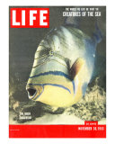 Queen Triggerfish, The World We Live In: Creatures of the Deep, November 30, 1953 Photographic Print by Fritz Goro