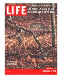 New Jersey Deer, The World We Live In: Woodland Close to Home, November 8, 1954 Fotografie-Druck von Gjon Mili