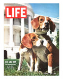 President Johnson's Beagles, June 19, 1964 Photographic Print by Francis Miller