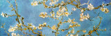 Almond Blossoms Posters by Vincent van Gogh