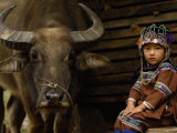 Hani Child and Water Buffalo for Ploughing Rice Paddies, Yuanyang, Honghe Prefecture, China Fotografie-Druck von Pete Oxford