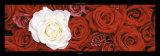 Roses I Affiches par Laurent Pinsard