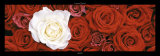 Roses I Print by Laurent Pinsard