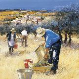 La Cueillette des Olives Art by Andre Deymonaz
