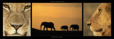 Elephants and Lions Poster von Michel & Christine Denis-Huot