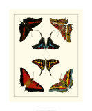 Butterflies II Premium Giclee Print by Pieter Cramer